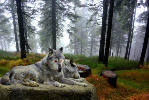 lobo mostra as Regras Do Plural Em Inglês
